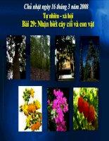 Bài 29: Nhận biêt cây cối và con vật