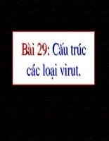 Bài 29: Cấu trúc của virut