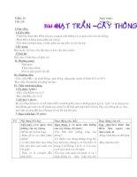 Bài 40 Hạt trần cây thông