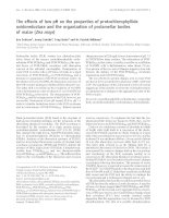 Tài liệu Báo cáo Y học: The effects of low pH on the properties of protochlorophyllide oxidoreductase and the organization of prolamellar bodies of maize (Zea mays) pot