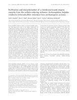 Tài liệu Báo cáo khoa học: Purification and characterization of a membrane-bound enzyme complex from the sulfate-reducing archaeon Archaeoglobus fulgidus related to heterodisulfide reductase from methanogenic archaea pdf