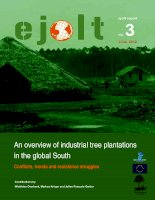 Tài liệu An overview of industrial tree plantations in the global South pptx