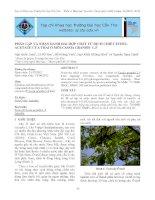 Tài liệu Phân lập và nhận danh hai hợp chất từ dịch chiết ethyl acetate của trái ô môi-Cassia grandis L.f ppt