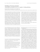 Tài liệu Báo cáo khoa học: Unfolding of human proinsulin Intermediates and possible role of its C-peptide in folding/unfolding pptx