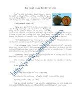 Tài liệu Kỹ thuật trồng dưa lê vân lưới ppt