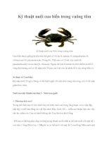 Tài liệu Kỹ thuật nuôi cua biển trong vuông tôm doc