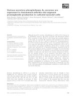 Tài liệu Báo cáo khoa học: Various secretory phospholipase A2 enzymes are expressed in rheumatoid arthritis and augment prostaglandin production in cultured synovial cells docx