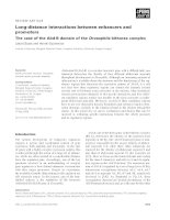 Tài liệu Báo cáo khoa học: Long-distance interactions between enhancers and promoters The case of the Abd-B domain of the Drosophila bithorax complex pdf