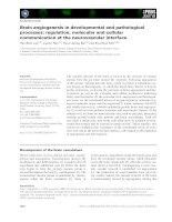 Tài liệu Báo cáo khoa học: Brain angiogenesis in developmental and pathological processes: regulation, molecular and cellular communication at the neurovascular interface pdf