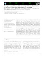 Tài liệu Báo cáo khoa học: Collagen I regulates matrix metalloproteinase-2 activation in osteosarcoma cells independent of S100A4 pdf