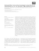 Tài liệu Báo cáo khoa học: Activated Rac1, but not the tumorigenic variant Rac1b, is ubiquitinated on Lys 147 through a JNK-regulated process docx