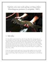 Tài liệu Nghiên cứu sản xuất giống cá lăng chấm Hemibagrus guttatus (Lacépède, 1803) docx