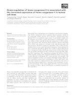 Tài liệu Báo cáo khoa học: Down-regulation of heme oxygenase-2 is associated with the increased expression of heme oxygenase-1 in human cell lines docx