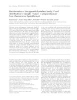 Tài liệu Báo cáo khoa học: Bioinformatics of the glycoside hydrolase family 57 and identification of catalytic residues in amylopullulanase from Thermococcus hydrothermalis doc