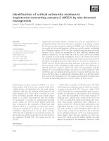 Tài liệu Báo cáo khoa học: Identification of critical active-site residues in angiotensin-converting enzyme-2 (ACE2) by site-directed mutagenesis docx