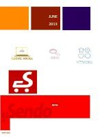 Internet Marketing strategy of Sendo.vn