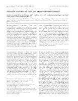 Tài liệu Báo cáo khoa học: Molecular evolution of shark and other vertebrate DNases I pptx