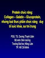 Tài liệu Protein chức năng: Collagen – Gelatin – Glucoprotein, những loại thực phẩm chức năng duy trì sức khỏe, sự trẻ trung doc