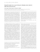 Tài liệu Báo cáo Y học: Characterization of a novel silkworm (Bombyx mori ) phenol UDP-glucosyltransferase potx