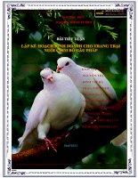 lập kế hoạch kinh doanh cho trang trại nuôi chim bồ câu pháp