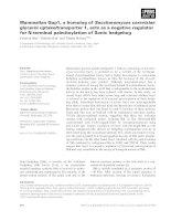 Tài liệu Báo cáo khoa học: Mammalian Gup1, a homolog of Saccharomyces cerevisiae glycerol uptake/transporter 1, acts as a negative regulator for N-terminal palmitoylation of Sonic hedgehog doc