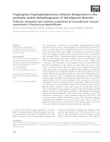 Tài liệu Báo cáo khoa học: Tryptophan tryptophylquinone cofactor biogenesis in the aromatic amine dehydrogenase of Alcaligenes faecalis Cofactor assembly and catalytic properties of recombinant enzyme expressed in Paracoccus denitrificans pptx