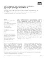 Tài liệu Báo cáo khoa học: Identification of two late acyltransferase genes responsible for lipid A biosynthesis in Moraxella catarrhalis doc