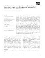 Tài liệu Báo cáo khoa học: Induction of uPA gene expression by the blockage of E-cadherin via Src- and Shc-dependent Erk signaling docx