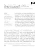 Tài liệu Báo cáo khoa học: Pyruvate reduces DNA damage during hypoxia and after reoxygenation in hepatocellular carcinoma cells pptx