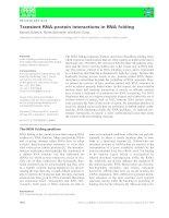 Tài liệu Báo cáo khoa học: Transient RNA–protein interactions in RNA folding docx