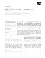 Tài liệu Báo cáo khoa học: The nuclear lamina Both a structural framework and a platform for genome organization pdf