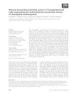 Tài liệu Báo cáo khoa học: Altered deoxyribonucleotide pools in T-lymphoblastoid cells expressing the multisubstrate nucleoside kinase of Drosophila melanogaster doc
