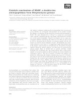 Tài liệu Báo cáo khoa học: Catalytic mechanism of SGAP, a double-zinc aminopeptidase from Streptomyces griseus pdf