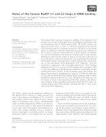 Tài liệu Báo cáo khoa học: Roles of the human Rad51 L1 and L2 loops in DNA binding doc