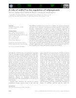 Tài liệu Báo cáo khoa học: A role of miR-27 in the regulation of adipogenesis ppt