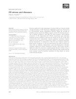 Tài liệu Báo cáo khoa học: ER stress and diseases docx