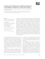 Tài liệu Báo cáo khoa học: 2,5-diamino-6-ribitylamino-4(3H)-pyrimidinone 5¢-phosphate synthases of fungi and archaea docx