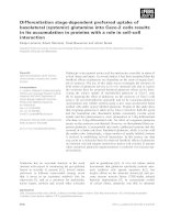 Tài liệu Báo cáo khoa học: Differentiation stage-dependent preferred uptake of basolateral (systemic) glutamine into Caco-2 cells results in its accumulation in proteins with a role in cell–cell interaction pptx