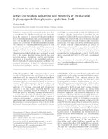 Tài liệu Báo cáo khóa học: Active-site residues and amino acid specificity of the bacterial 4¢-phosphopantothenoylcysteine synthetase CoaB pptx