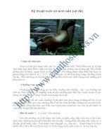 Tài liệu Kỹ thuật nuôi vịt sinh sản (vịt đẻ) doc