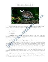 Tài liệu Kỹ thuật nuôi chim cút đẻ pptx