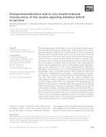 Tài liệu Báo cáo khoa học: Compartmentalization and in vivo insulin-induced translocation of the insulin-signaling inhibitor Grb14 in rat liver pptx