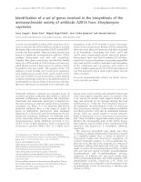 Tài liệu Báo cáo Y học: Identification of a set of genes involved in the biosynthesis of the aminonucleoside moiety of antibiotic A201A from Streptomyces capreolus pdf