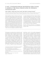 Tài liệu Báo cáo khoa học: A novel c-N-methylaminobutyrate demethylating oxidase involved in catabolism of the tobacco alkaloid nicotine by Arthrobacter nicotinovorans pAO1 ppt