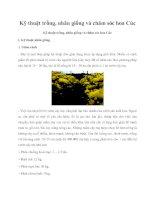 Tài liệu Kỹ thuật trồng, nhân giống và chăm sóc hoa Cúc pptx