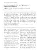 Tài liệu Báo cáo khoa học: Identi®cation and properties of type I-signal peptidases of Bacillus amyloliquefaciens doc