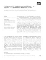 Tài liệu Báo cáo khoa học: Phosphorylation of cyclin dependent kinase 4 on tyrosine 17 is mediated by Src family kinases pptx