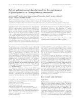 Tài liệu Báo cáo Y học: Role of sulfoquinovosyl diacylglycerol for the maintenance of photosystem II in Chlamydomonas reinhardtii ppt