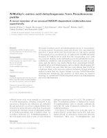 Tài liệu Báo cáo khoa học: N-Methyl-L-amino acid dehydrogenase from Pseudomonas putida A novel member of an unusual NAD(P)-dependent oxidoreductase superfamily ppt