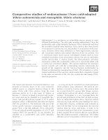 Tài liệu Báo cáo khoa học: Comparative studies of endonuclease I from cold-adapted Vibrio salmonicida and mesophilic Vibrio cholerae docx